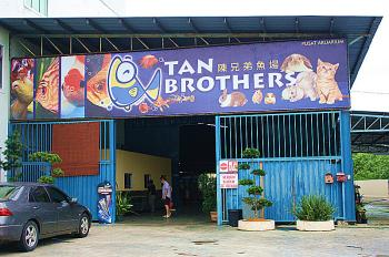 TAN BROTHERS AQUATIC